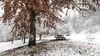 Udazkeneko elurra... (Raul Piki Bolukua) Tags: autumn snow landscape white red tree nature nikond3200 sigma1020 bergara sanmartzial basquecountry euskalherria nieve árbol outdoor rural