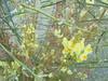 348 (en-ri) Tags: fiorellini giallo sony sonysti little flowers