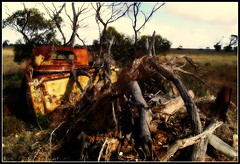 Stuck in the middle (bushman58929) Tags: digital olympus bushman58929 ruins rusty wreck cars abandoned southaustralia australia travel crusty farming landscape colors image photograph photography light textures ambience alone