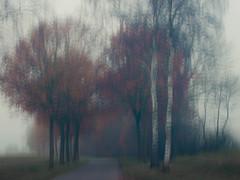 Winter Mood (ursulamller900) Tags: pentacon2829 winter mood fog landscape landschaft hss trees bäume birken birch