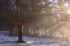 The Magic of the Autumn (Hector Prada) Tags: bosque otoño niebla nieve sol luz hojas bruma neblina árbol espiritual magia forest autumn fog snow sun light leaves mist morning tree magic sunbeams spiritual mood paisvasco basquecountry