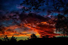 November Night Sky (Kevin_Jeffries) Tags: silhouette sunset dusk red sky clouds tree colour evening light nikon nikkor d800 kevinjeffries nature naturallight firesky newzealand