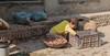 0F1A2903 (Liaqat Ali Vance) Tags: portrait people street life google liaqat ali vance photography lahore punjab pakistan face working shopkeeper child