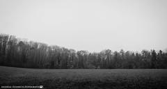 A gloomy morning in November. (andreasheinrich) Tags: landscape forest field autumn november morning blackandwhite blackandwhitephotos cold gloomy germany badenwürttemberg neckarsulm dahenfeld deutschland landschaft wald feld herbst morgen schwarzweis kalt düster nikond7000