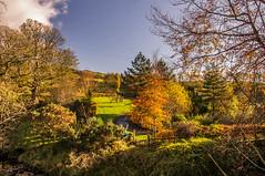 Arborial (Half A Century Of Photography) Tags: tree trees autumn scotland ayrshire northayrshire