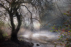 Au pays d'Ondine... (Isabelle Aurore) Tags: bretagne brittany arbre tree brume matin rivière river stangala magique landscape paysage water odet finistère