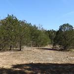 Cedar Glade thumbnail