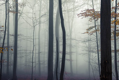* (sedregh (off for some days)) Tags: tree trees forest woods fog mist eifel november