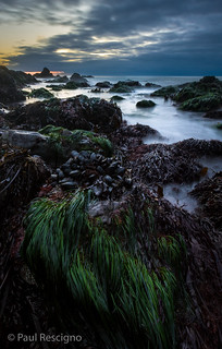 Mussels and Sea Grass in Tide Pools on Sonoma Coast, California
