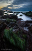 Mussels and Sea Grass in Tide Pools on Sonoma Coast, California (Paul Rescigno) Tags: seagrass mussels sonomacoast pch route1 california dusk twilight sunset tidepools schoolhousebeach bodegabay norcal