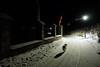 THE BURNING BRIER (LitterART) Tags: neuberg steiermark österreich nacht nightshot neubergermünster burningbrier flame fire feuer flammer hund dof chien