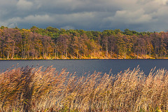 autumn by the lake (bożenabożena) Tags: landscape lake sunset trees gold krajobraz jezioro jesień drzewa trawy sky grass autumn