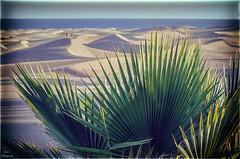 Paisaje dunar... (Leo ☮) Tags: dunas arena sand dunes palmera maspalomas grancanaria islascanarias