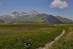 Alp flix im Sommer (Basel101) Tags: mountain swiss switzerland mountains summer river flowers flower hike hiking holiday tourism fun green graubünden grisons grillieren