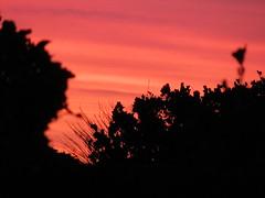 IMG_4279 (wallygrom) Tags: england westsussex eastpreston kingstongorse beach seaside sky sunset evening