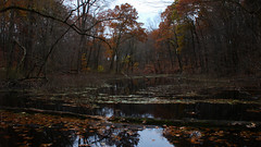 Last breath of fall (phl_with_a_camera1) Tags: michigan nature fall winter cold water lake tree forest reflection wilderness wild