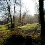 Bosc de Tosca thumbnail