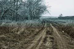 The Line Between Fall And Winter (myoldpostcards) Tags: rural country landscape season fall autumn dirt bandy road rd menardcounty centralillinois illinois il unitedstates myoldpostcards randy randall vonliski atmosphere thelinebetweenfallandwinter canon eos 5d markiv