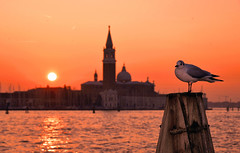 venice sunset (poludziber1) Tags: street streetphotography summer skyline sky sea sunset city colorful cityscape color colorfull clouds venice venezia travel urban bird church orange italia italy light fotocompetition fotocompetitionbronze fotocompetitionsilver matchpointwinner mpt650