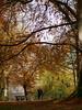 Autumn-Love (Digitalsucher) Tags: herbst autumn indiansummer indian summer tree forest rotbuche buche trauerweide nature natur digital yellow orange olympus 75mm18 7518 75mm 18 75 panasonic dmcg80 dmcg81 dmcg85 g80 g81 g85 dslm csc mft m43