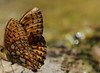 Beautiful (Marta Lonza) Tags: animals carso trieste nature natural colour fly butterfly dragonfly