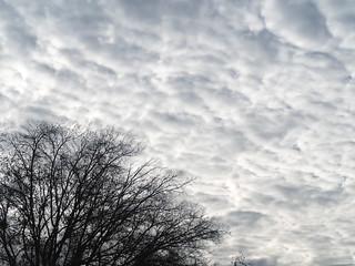Fluffy Dark Clouds & Stark Trees 1 of 2