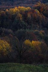 Tree three (Ivan Vranić hvranic) Tags: tree trees light autumn sunset croatia braslovje