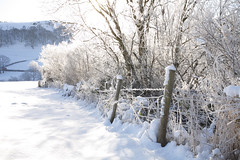 1027572 (External Media Library) Tags: welsh natural wild wildlife environment environmental europe european powys wales britain british snow freeze freezing white winter wintry llanidloes hill hilly valley tree fence woodland trust trees