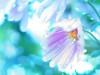rain (Tomo M) Tags: chrysanthemum bokeh autumn raindroplets waterdroplets petal nature pentacon
