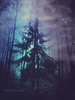 luminous forest (Dyrk.Wyst) Tags: tree mystery forest textures surreal night fall blue dark mood misty wilderness glow magical iphone woods intothefog retro violet silhouettes fir stars eerie dreamy
