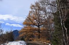 Mont Chemin (bulbocode909) Tags: valais suisse montchemin montagnes nature arbres automne forêts mélèzes neige nuages paysages orange bleu