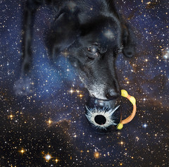 sirius drinking from the solar eclipse (Stefanie Timmermann) Tags: studio26 tribute dog sirius eclipse solar mug
