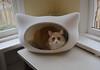 Jimmy in the Whiskas cat bed (rootcrop54) Tags: jimmy orange ginger tabby masked male whiskas cat head bed table window neko macska kedi 猫 kočka kissa γάτα köttur kucing gatto 고양이 kaķis katė katt katze katzen kot кошка mačka gatos maček kitteh chat ネコ cc100 cc500