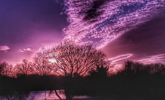 Trying out my new filters 😁🌞😁 (explored) (LeanneHall3 :-)) Tags: sunshine sun fldfilter skyscape sky clouds hull kingstonuponhull lake eastpark trees branches purple pink white landscape canon 1300d inexplore explored sundaylights