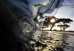 Glass Curtain (Omnitrigger) Tags: wave swell lip glass beach trees sand beachbreak shorebreak barrel tube shack ocean pacific watershot lookin surf