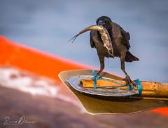 DSC_9620 (@sumitdhuper) Tags: beauty wallshare animal birds