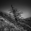 Lonesome tree (vegard.magnus) Tags: square tree bw black white blanc noir nature landscape alps alpes alone lonesome buech monochrome olympus em5 em5mkii autumn light oule pic bure veynes mysterious slope clouds fog
