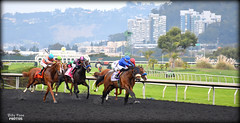2017 Gold Rush Stakes - Golden Gate Fields (billypoonphotos) Tags: tapeta golden gate fields berkeley 2017 jockey horse racing thoroughbred dirt track photo picture photography photographer billypoon billypoonphotos nikon d5500 18140mm nikkor news stretch win finish synthetic race 18140 mm sign gold rush stakes city plan tyler connor godolphin harness sport stadium