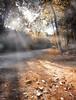 Cold morning (Henrique J.Silva) Tags: mafra tapada portugal autumn outono leaf forest path fog cold tree sun sunshine landscape nature nobody canonphotos canon6d 1740l lee hitech firecrest
