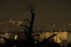 Barn Owl night moves (stonebird) Tags: img9731 barnowl tytoalba ballonawetlandsecologicalreserve areab december stonebird