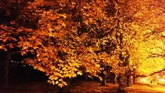 c199 - Gdynia - Pilsudski Avenue (si-mi-do) Tags: poland polish shore gdynia aleja marszalka jozefa pilsudskiego pilsudski avenue polonia wybrzeze drzewa trees arboles costa town ciudad miasto outdoor wieczor evening noche