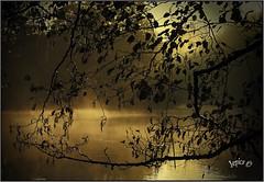 River Mist. (Picture post.) Tags: landscape nature green autumn mist river alder reflections paysage arbre eau brume vignette