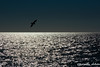 Avanti (jmacirez13) Tags: andalucía cádiz cádizcapital españa horizonte horizontes campodelsur mar atlántico gaviota atardecer contraluz contraluces