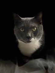 (mwelsch70) Tags: studiolight cat iphonex