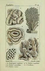 n58_w1150 (BioDivLibrary) Tags: annelida atlases cnidaria echinodermata eels helminths worms universitylibraryuniversityofillinoisurbanachampaign bhl:page=54348100 dc:identifier=httpsbiodiversitylibraryorgpage54348100