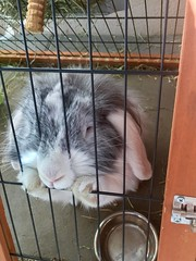 I need caress (gosselinclara) Tags: mayo sud south france caresse caress bunny rabbit lapin amour love