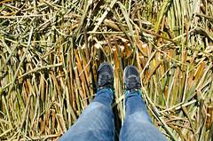 Totora island soil (Mabelín Santos) Tags: totora titicaca puno