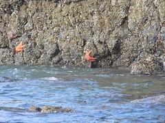 OREGON (AngelaG1) Tags: stars beach sand watersea ocean nature