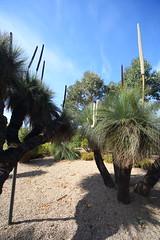 Cranbourne RBG Nov 2017 015- black boys and girls in flower (Graeme Butler) Tags: water landscape history gardens australianplants architecture victoria australia