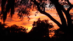 Sunset Fire (Jim Mullhaupt) Tags: sunset sundown dusk sun evening endofday sky clouds color red gold orange pink yellow blue tree palm outdoor silhouette weather tropical exotic wallpaper landscape nikon coolpix p900 bradenton florida manateecounty jimmullhaupt cloudsstormssunsetssunrises photo flickr geographic picture pictures camera snapshot photography nikoncoolpixp900 nikonp900 coolpixp900